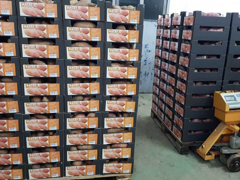 Velebit Agro osigurava palete, preuzimanje i prijevoz odmah nakon vađenja